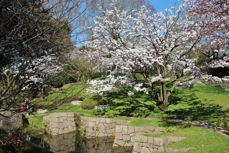 cerisier-2-mylittleroad