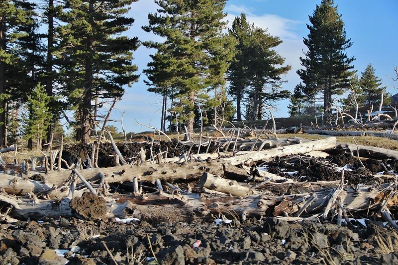 arbre-mort-etna-mylittleroad