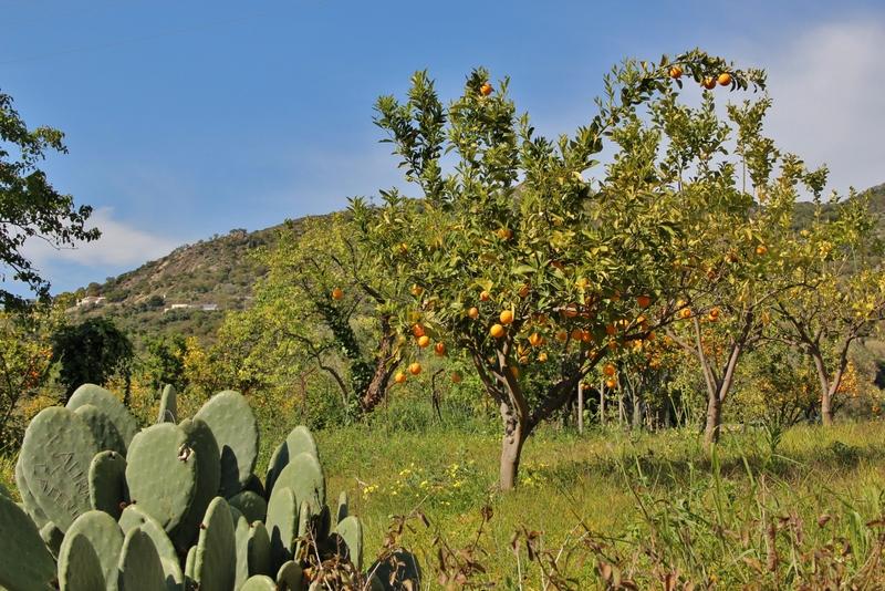 oranger-alcantara-mylittleroad