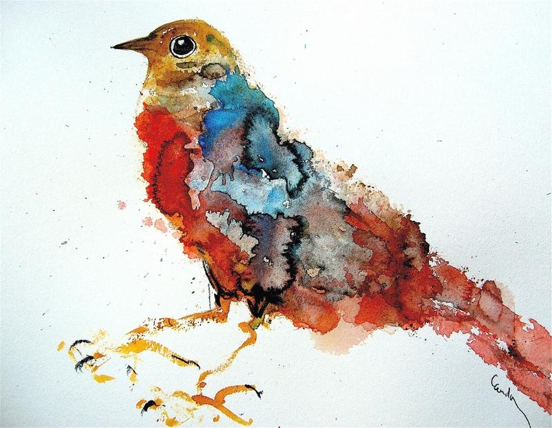 oiseau_cauda