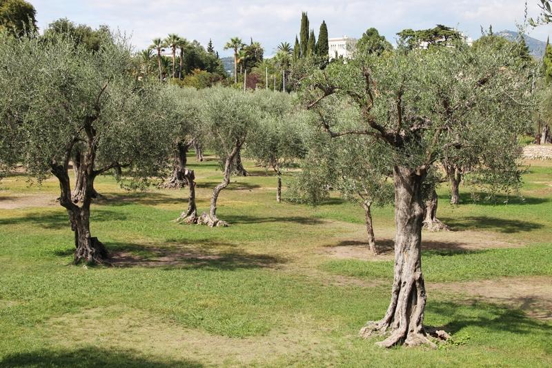olivier-nice-mylittleroad