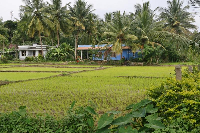 paysage-vert-india-mylittleroad