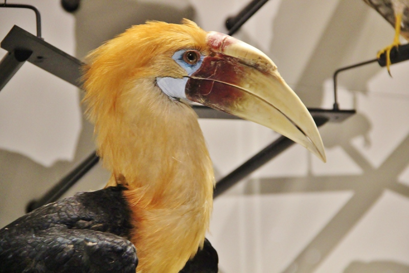toucan-musee-confluence-mylittleroad