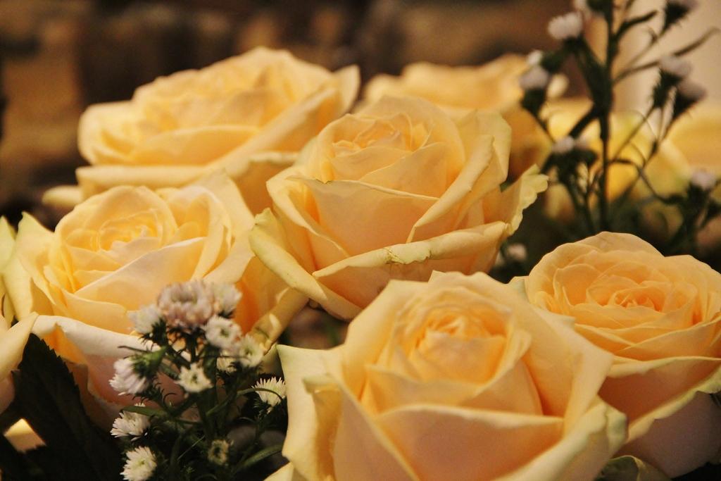 roses-splendid-hotel-cannes