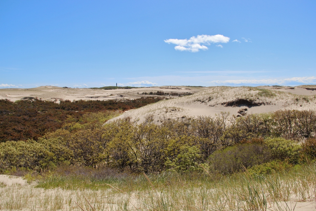 Art Dune Tours