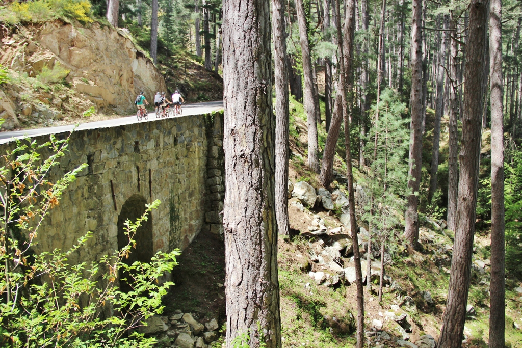 arbres-majestueux-montagne-ghisoni-corse
