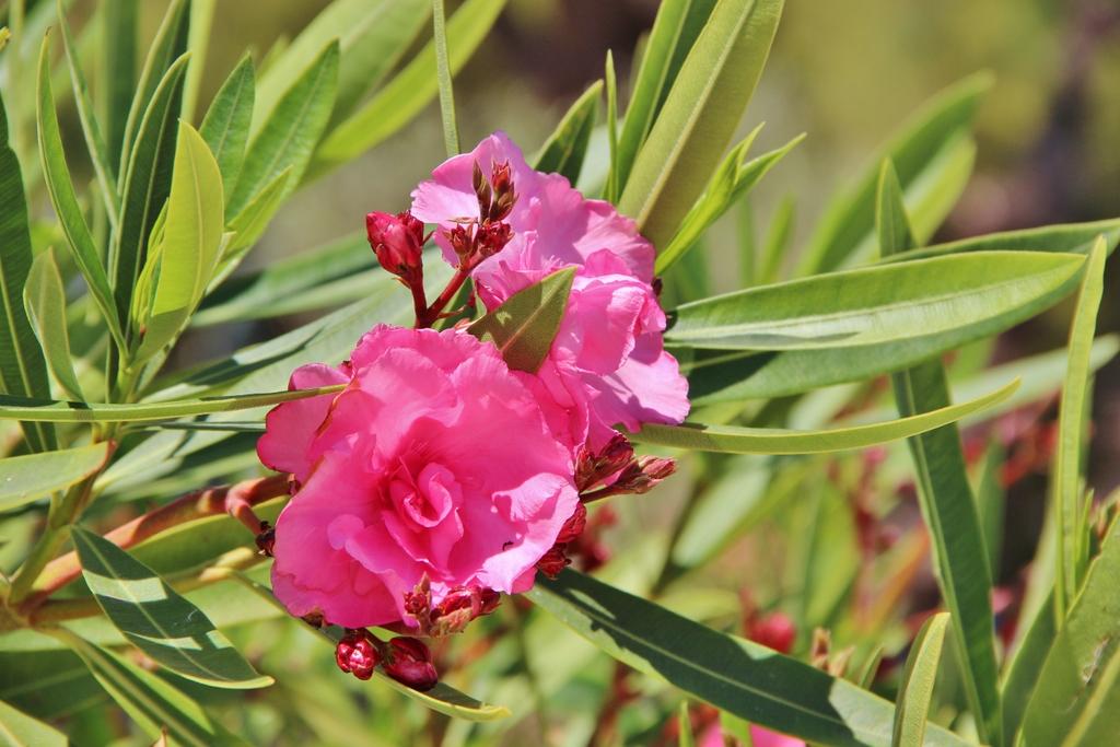 fleurs-bendor-mylittleroad