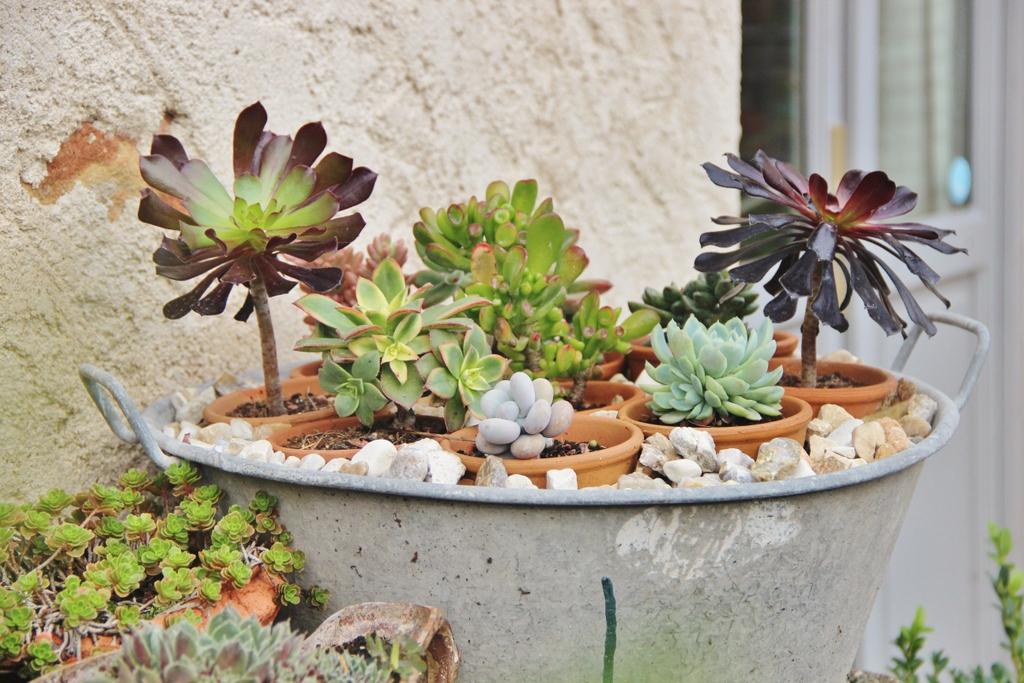 cactus-crapaudiere