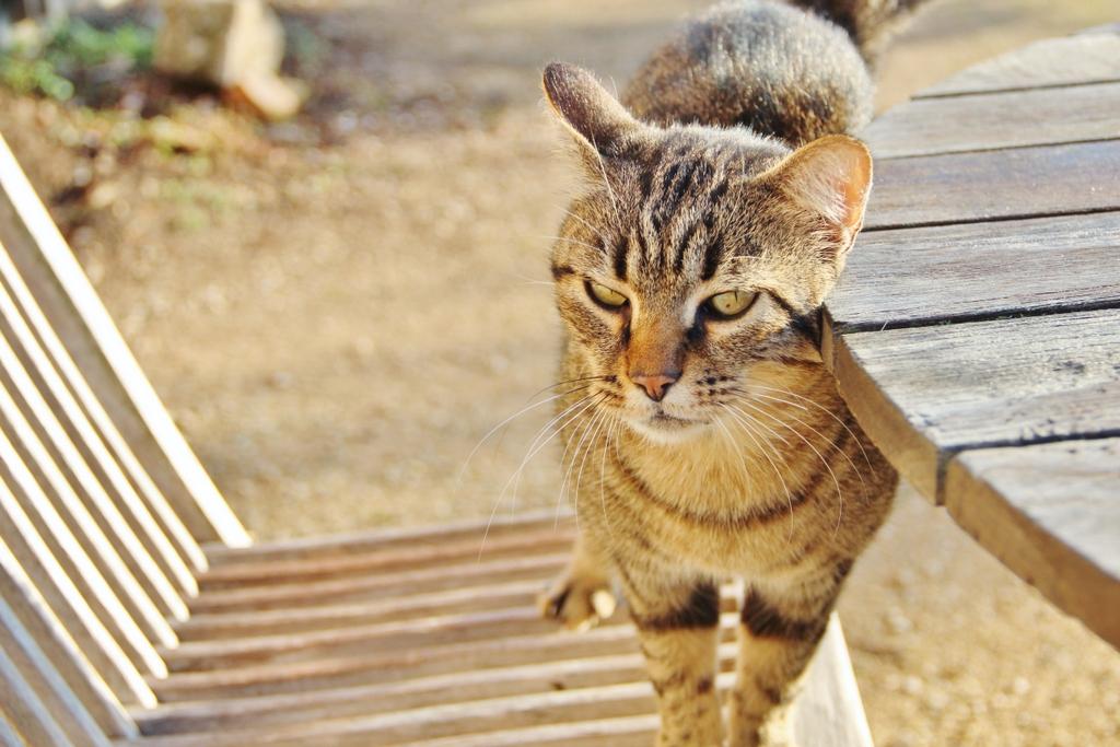 chat-domaine-ris-feu