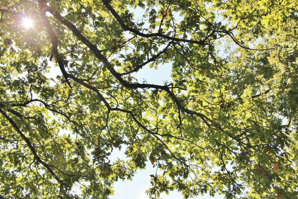 soleil-entre-arbres-berry