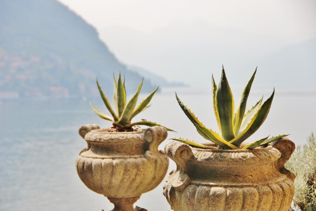 plante-cactus-lac-come