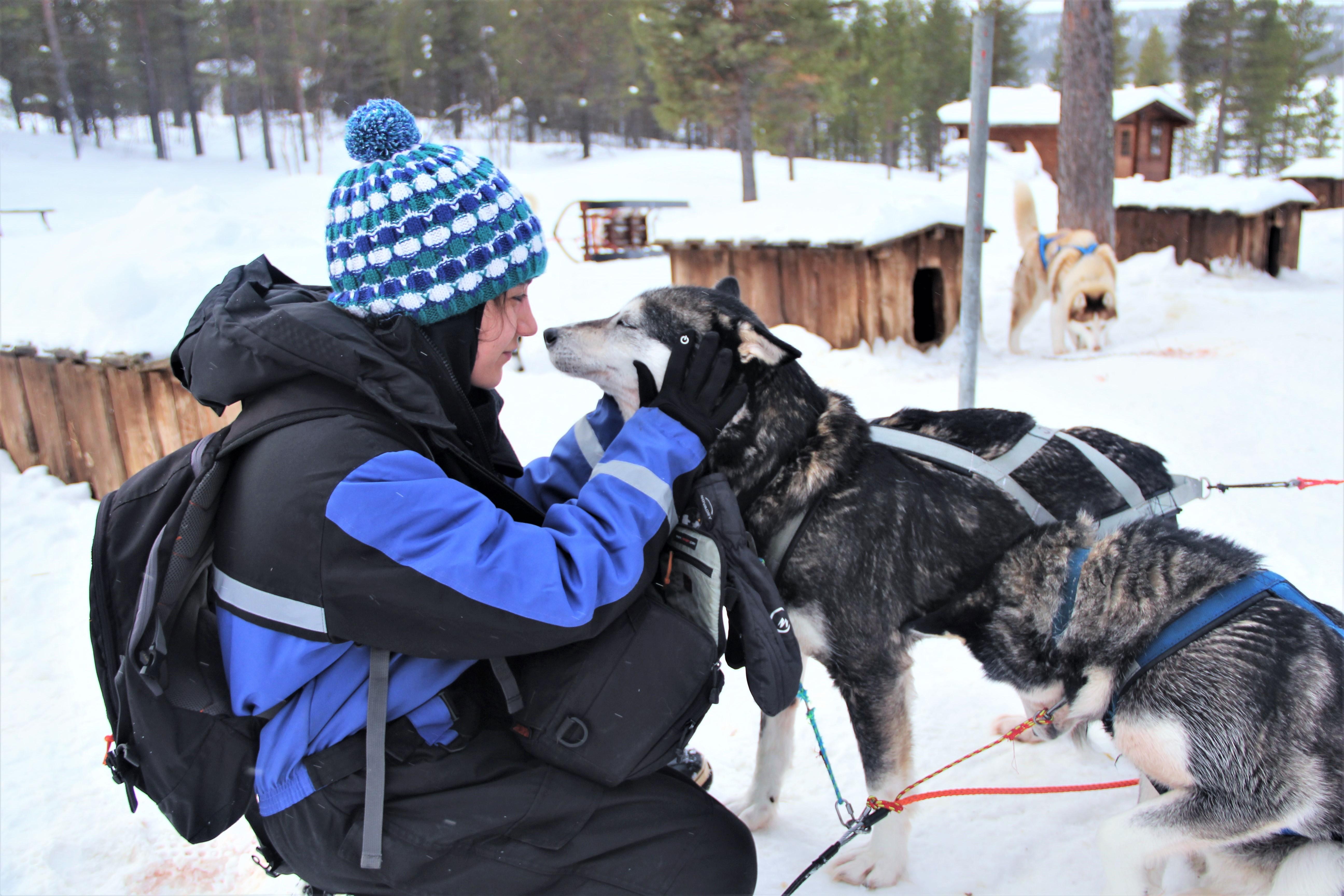 chiens-calin-kiruna-suede-mylittleroad